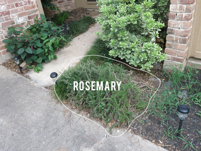 Yard is Hard, Part II: Clean Up On Aisle Grass - evanandkatelyn.com