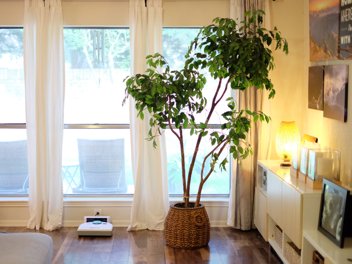 One man's trash is another man's new faux plant - evanandkatelyn.com