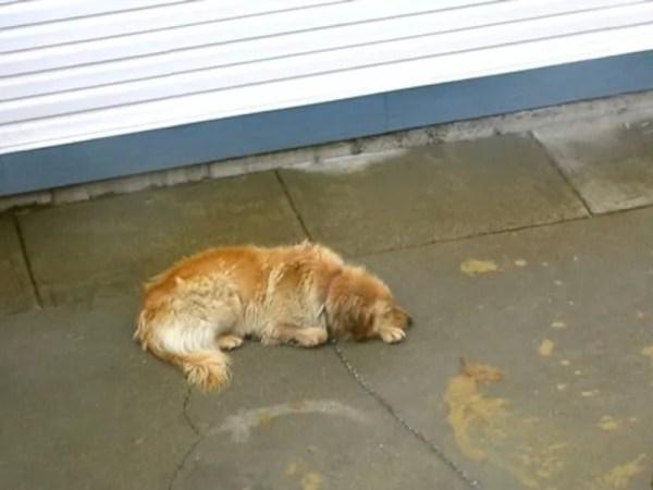 happy-ending-rescue-dog-alfie-06