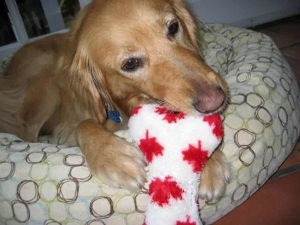 happy-ending-rescue-dog-alfie-10