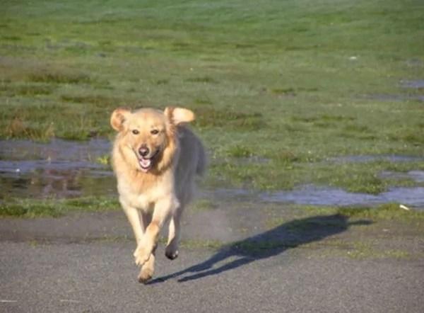 happy-ending-rescue-dog-alfie-15a