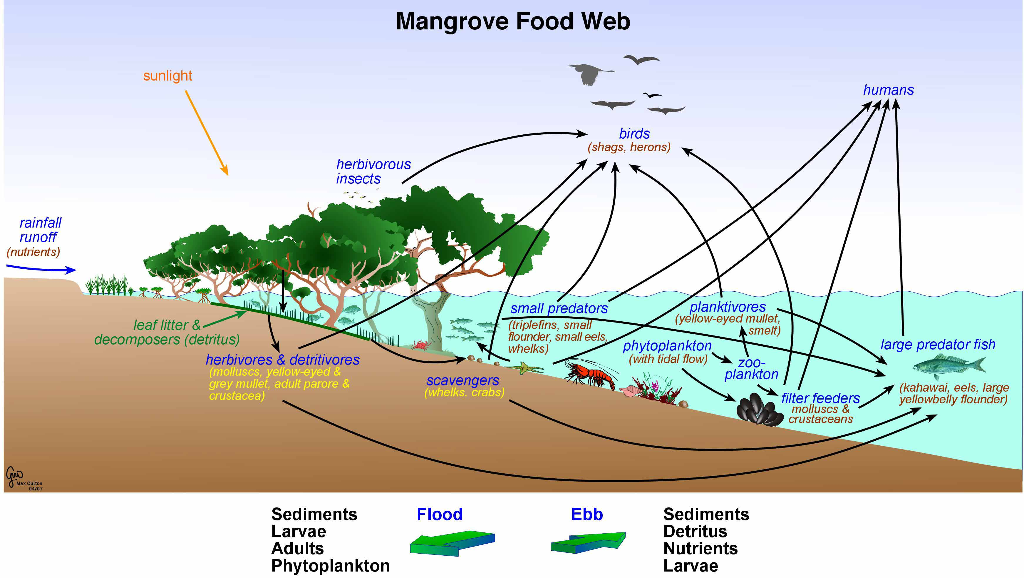 pond ecosystem diagram ford 4000 tractor ignition switch wiring mangroves and aquatic life in florida