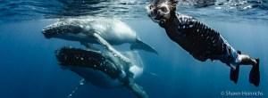 Evan Rapoport swimming with humpback wahesl