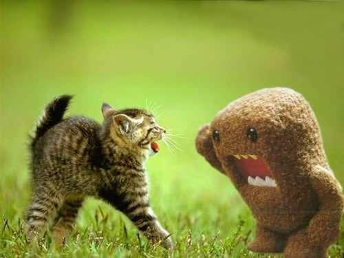 domo vs cat evan s blog