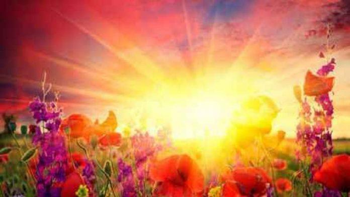 lumiere-soleil-fleurs-696x391