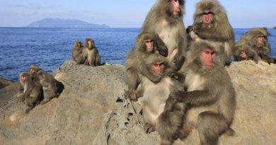 La théorie dite « du 100ème singe », la réalisation individuelle au service du collectif !