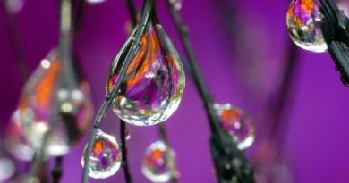 Les scientifiques prouvent que l'eau a une mémoire