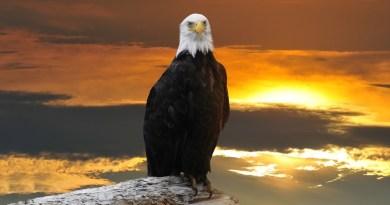 Message de White Eagle, de la nation Hopi