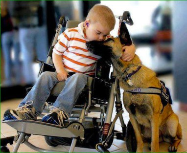 SP009_chien-handicap