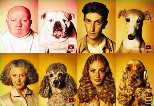 SP009_ressemblances-animaux-maitres