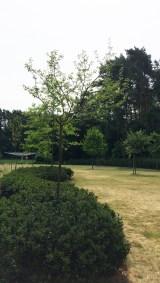 Tuinarchitect_geel_voorbeeld_speelse_tuin4