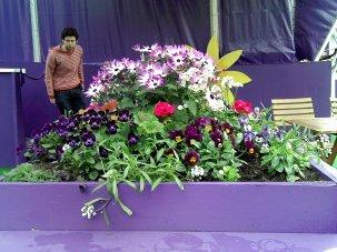 sumer flowers