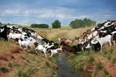 Weaver Ranch, Colorado © Eve Bernhard. August, 2011