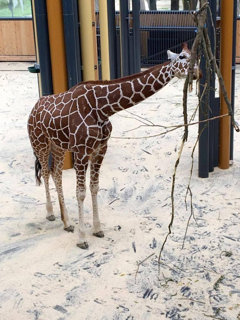 Viena zoo 4