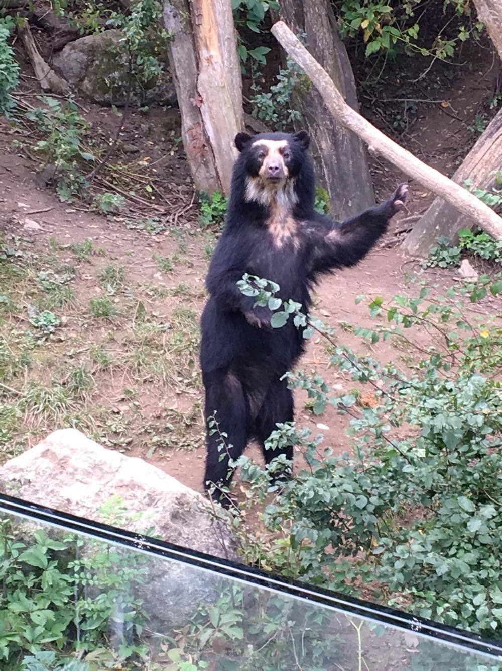 Vienna zoo 11