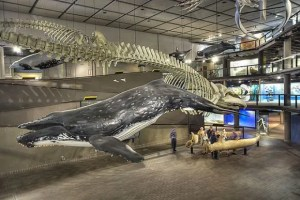 Whale_Well_South_African_Museum_580_387_80_s_580_387_80_s