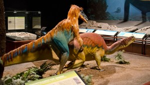 800px-Deinonychus_attacks_Tenontosaurus_-_model_-_Museum_of_the_Rockies_-_2013-07-08