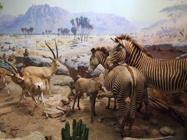 American Museum of Natural History 3__OTIS