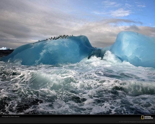 PinguinosIceberg
