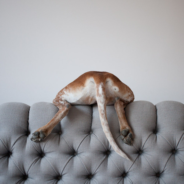 Dia de Perros…