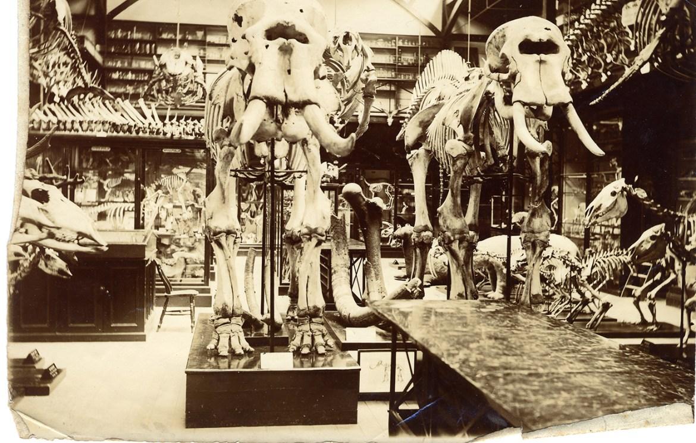Los 15 Museos Más Antiguos del Mundo