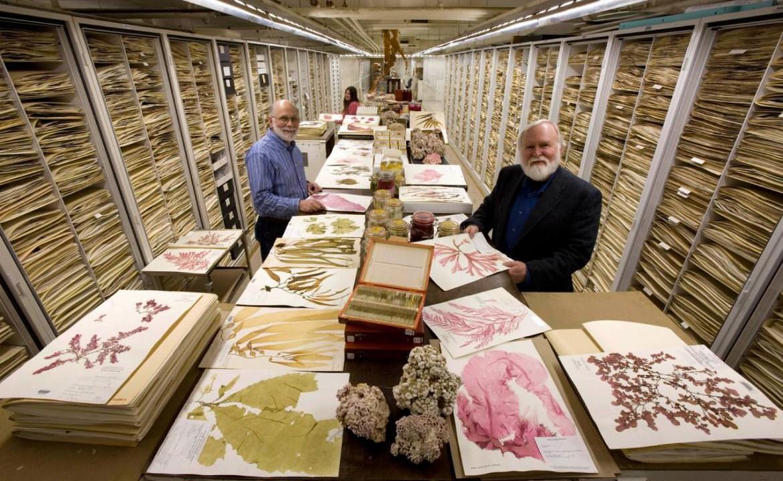 Museo: ¿Qué es una Colección?