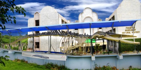 Blue_Whale_Skeleton_articulated_on_the_outer_wall_of_the_Pakistan_Museum
