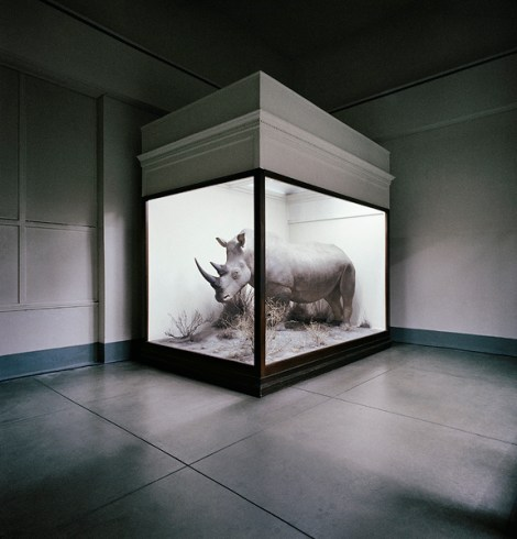 Rhino, Field Museum, Chicago, Illinois, USA, 1981