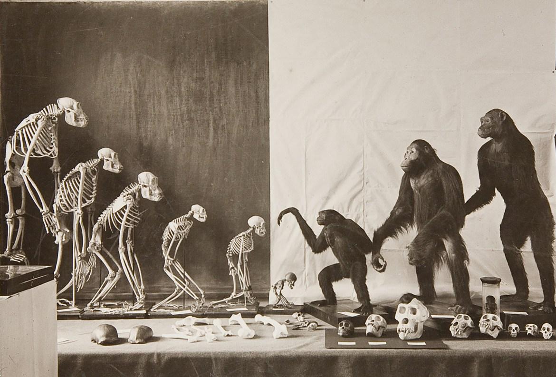 Prácticas Museológicas: Antiguo vs. Nuevo
