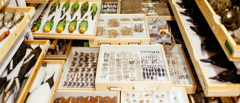 Colecciones del Museo y su Uso en Exposiciones