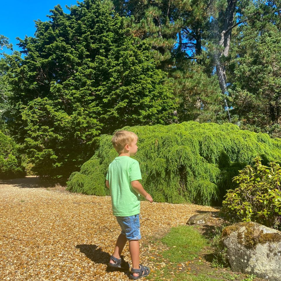 young boy stands with his back to camera in the gardens