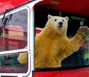 Polar Bear bus driver