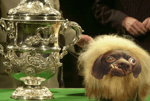 crufts winner