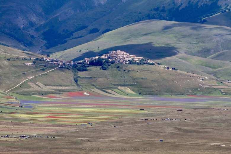 fioritura sulla pianura di Castelluccio