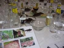 Cata de Gin tonics maridados con chocolates _5_