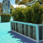 Buxus eco box event plants hire melbourne