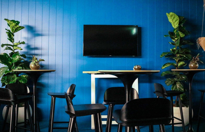 Fiddle leaf figs indoor event plants hire melbourne