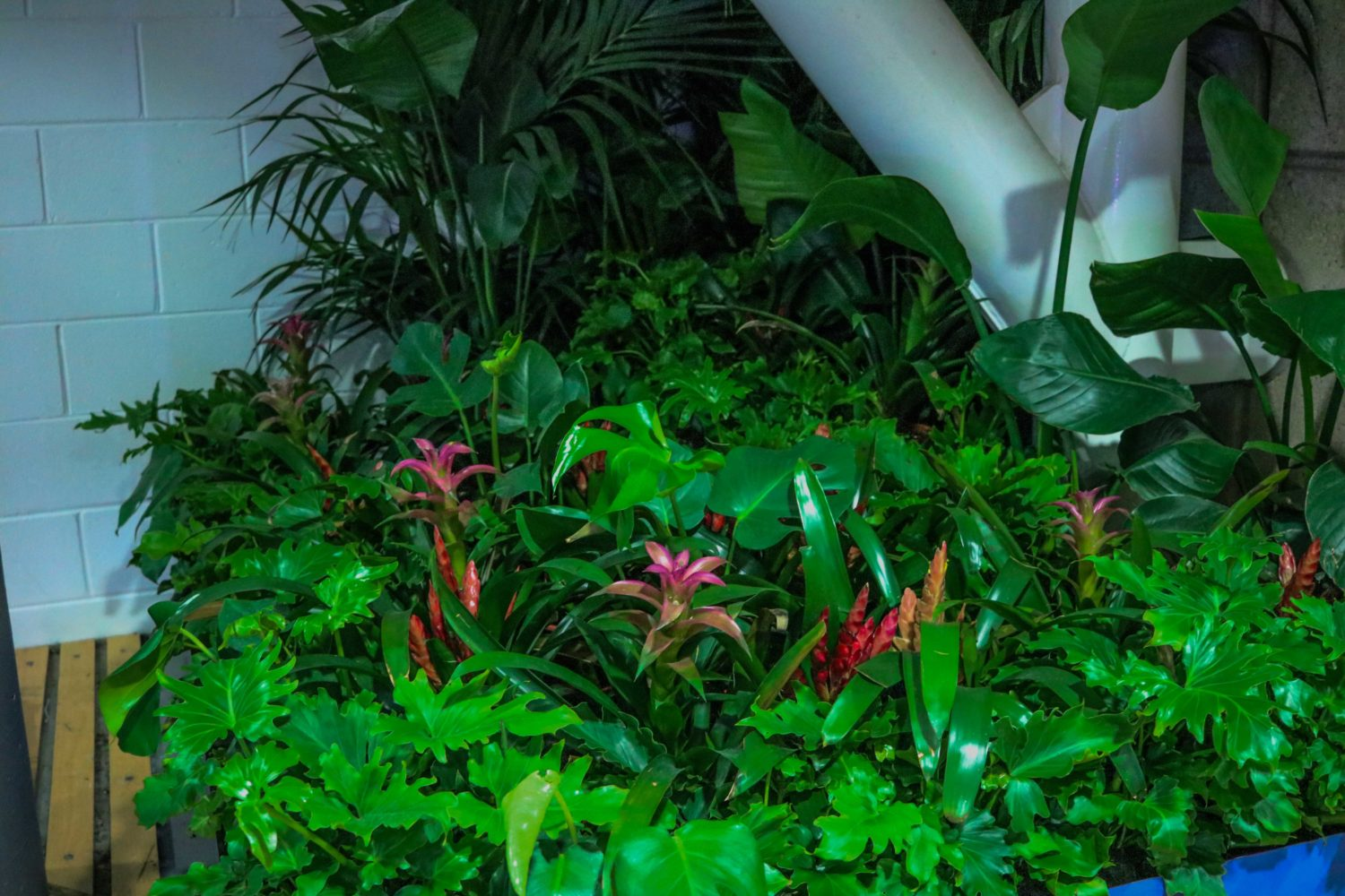 jungle bromeliads monstera kentia palms bird of paradise event plants melbourne hire