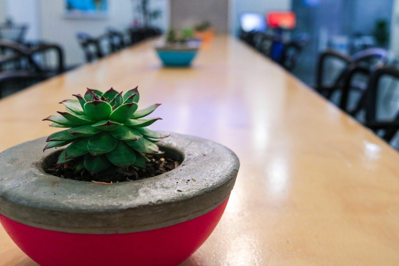 succulents pots event plants melbourne hire