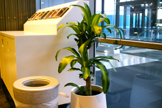 happy plant pot white indoor event plants hire melbourne
