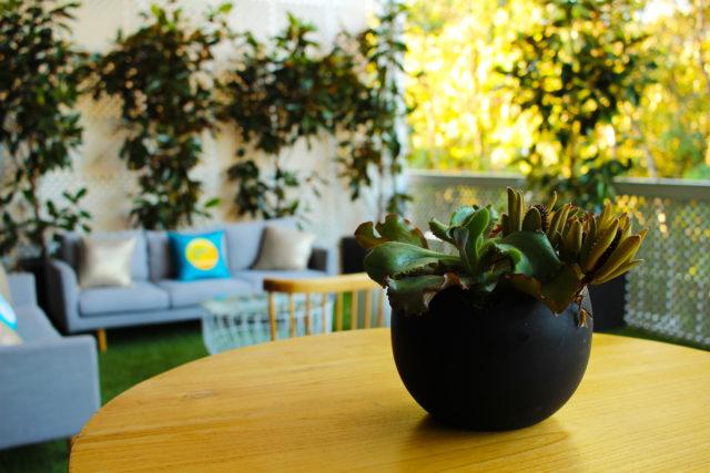 succulents black pots outdoor