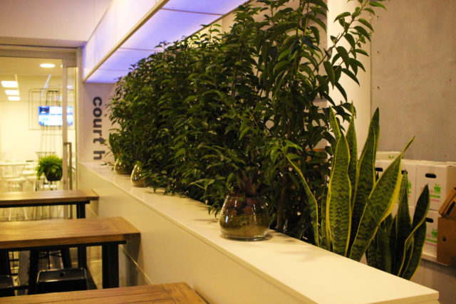 indoor plant display mother in law tongue lily pilly syzyguim succulents terrarium event plants hire melbourne