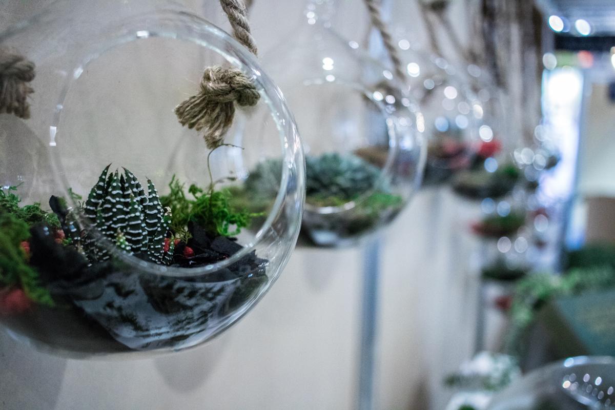 Hanging Terrariums Event Plants