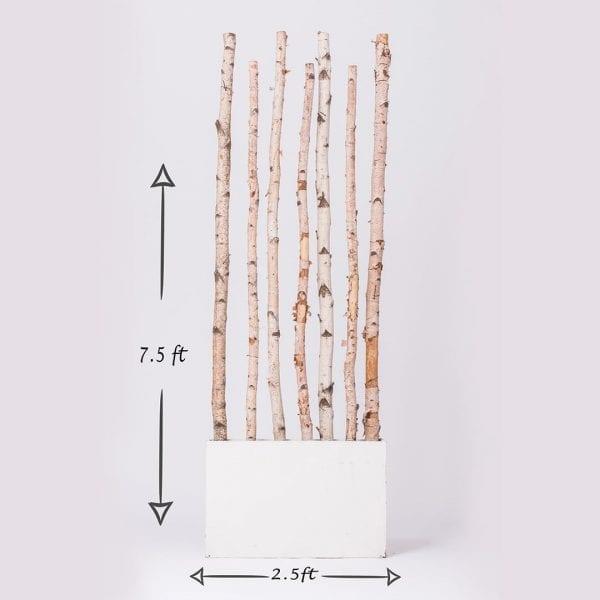 Birch Panel