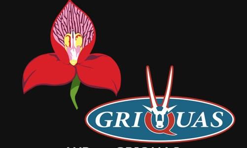 UXi Rugby Institutes Showdown   WP vs Griquas
