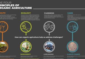 What are the four principles of organic agriculture?