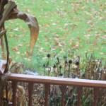 Front Garden Visitors