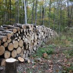 How Much Wood :: Split
