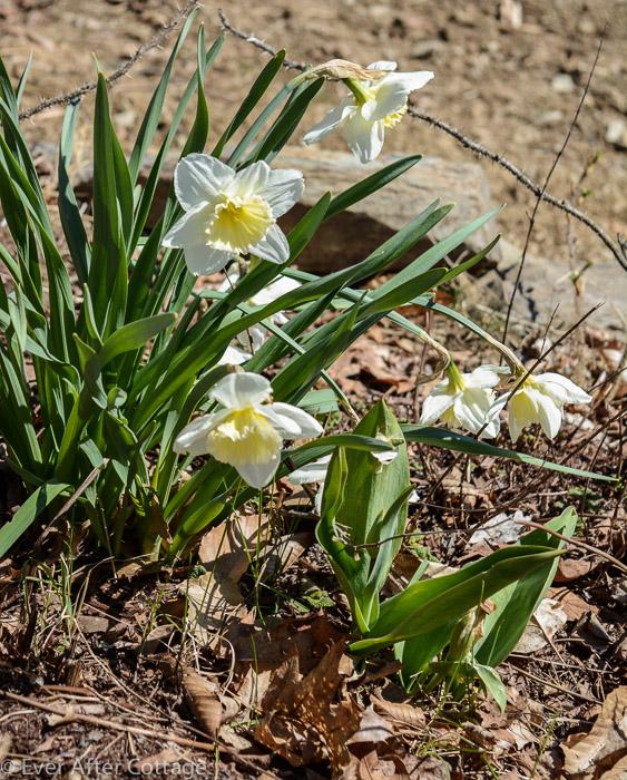 april_garden-1