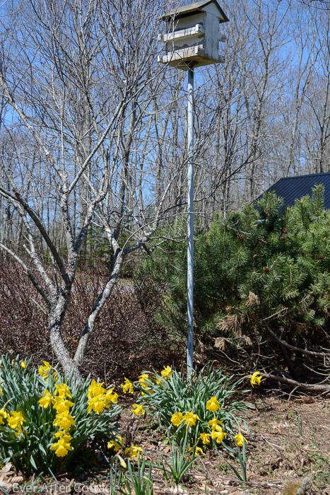 april_garden-2